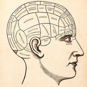brain_diagram 2